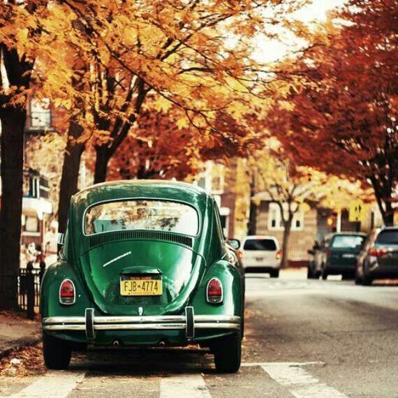 Осенние каникулы в Великобритании. Фото - 8