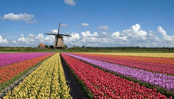 Середня освіта в Нідерландах. Фото - 9