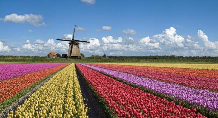 Навчання в Нідерландах. Фото - 7