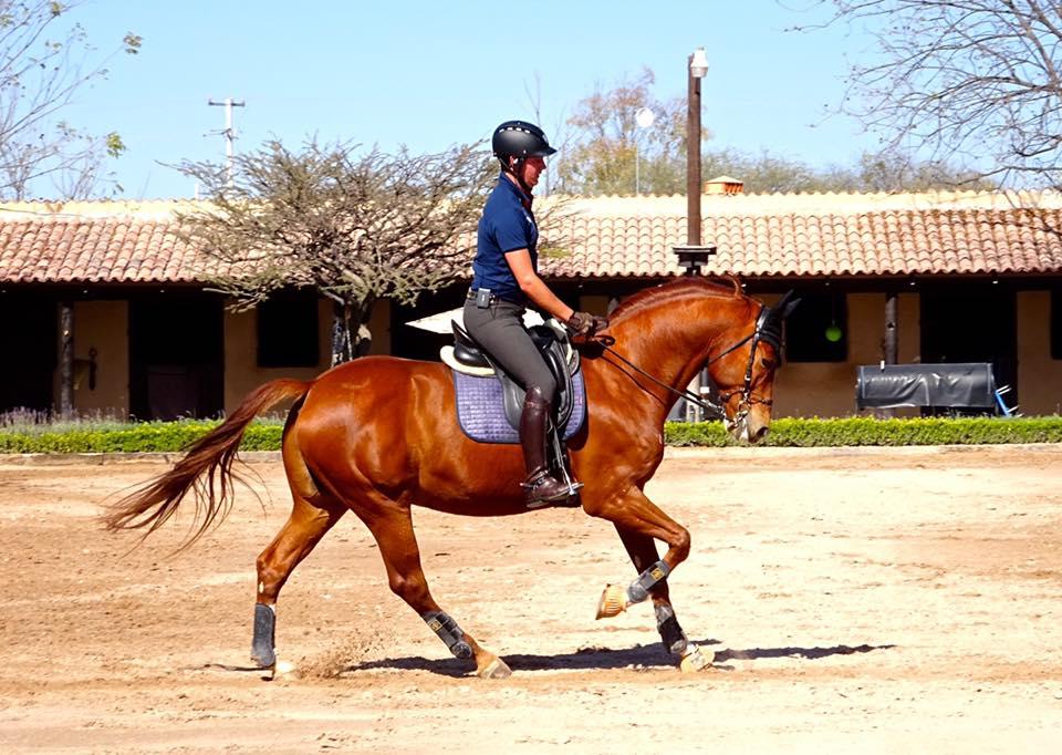 Equine Support International. Фото - 8